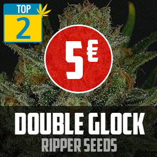 TOP 2 Double Glock Ripper Seeds
