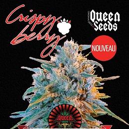 Queen Crispy Berry